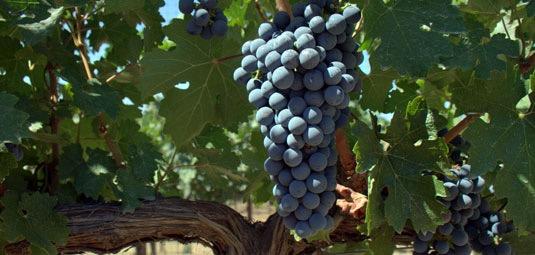 milagro-winemaking-02.jpg