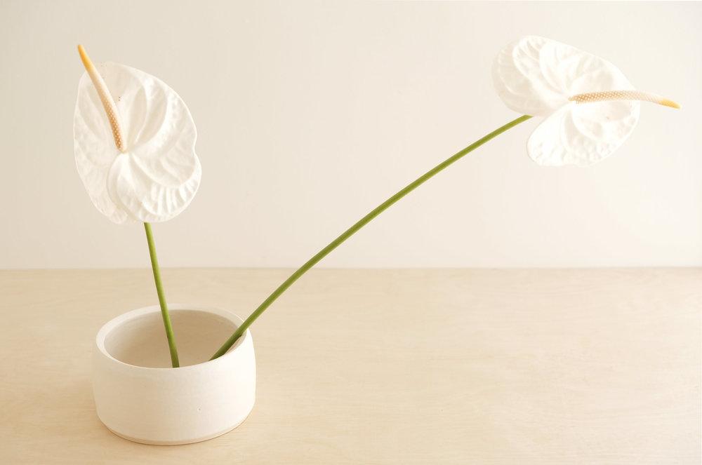 white-bowl.jpg