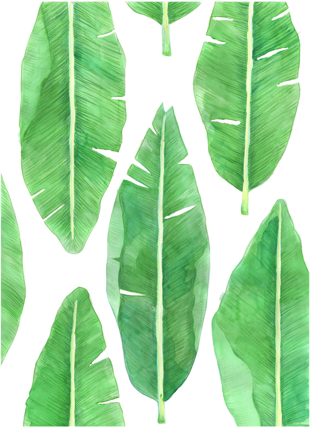 Banana Leaves.jpg