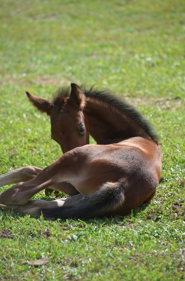new foal bay.jpg
