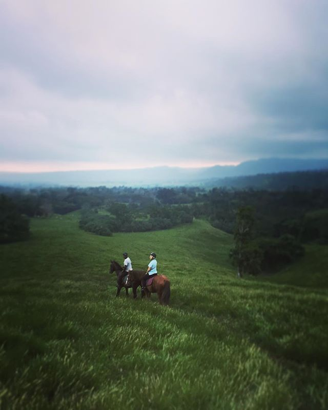 Not sure where to visit whilst in Vanuatu? Why not a beautiful rainforest ride through Bellevue plantation 🐴🌴⛰ Even on an overcast day with poor visibility, the views are spectacular!  #BellevueRanch #horseriding #vanuatu #discovervanuatu #tour #beautiful #adventure #bucketlist #travel #holiday #fun  @iririki @holiday_inn_resort_vanuatu @breakasresort @vanuatuislands @ripples_resort_vanuatu @wotz_on_vanuatu