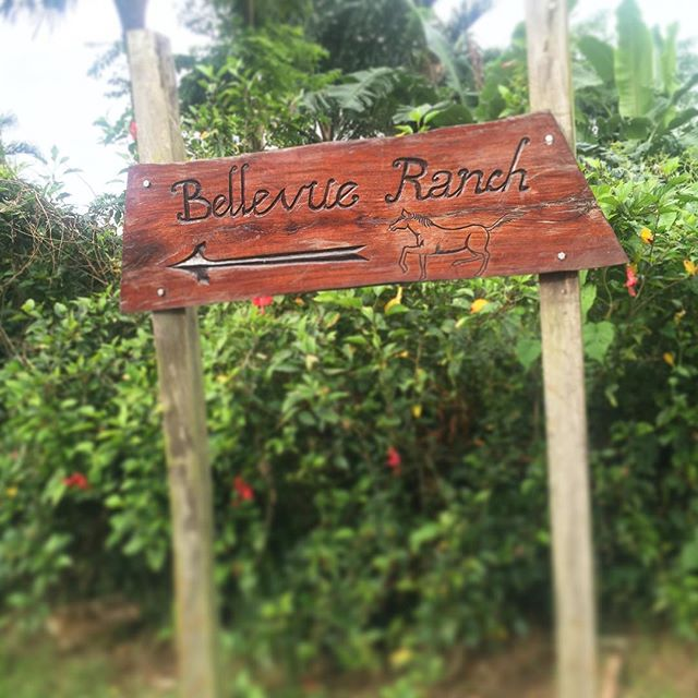 Handcrafted sign for Bellevue 😍  We love supporting local business as we know how much it means to get that support in return! Bellevue is the only Ni-Vanuatu owned equestrian centre in Vanuatu. Help support us and book local when you visit Vanuatu 👍  #supportlocal #localbusiness #entrepreneur #horseman #business #equestrian #tour #discovervanuatu #vanuatu #horseriding #holiday #fun