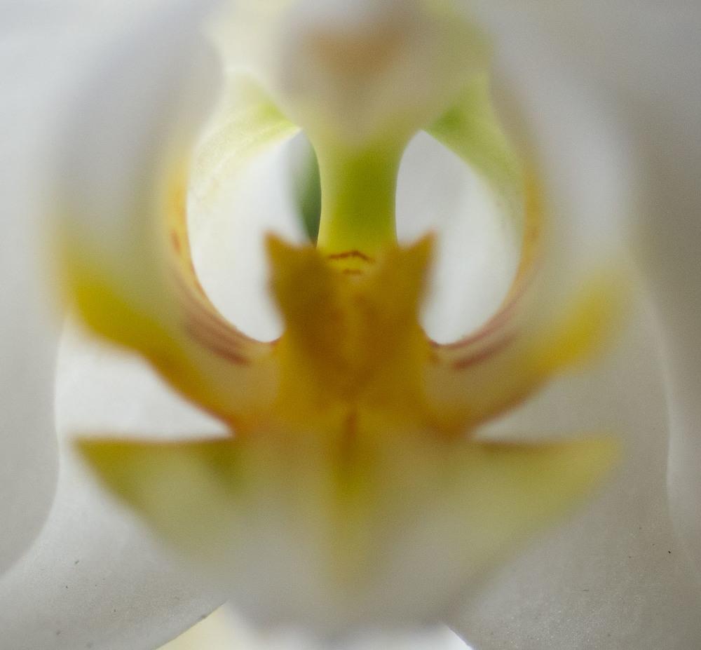 20160403-Flower8060.jpg