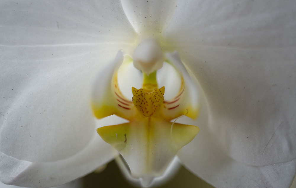 20160403-Flower8061.jpg