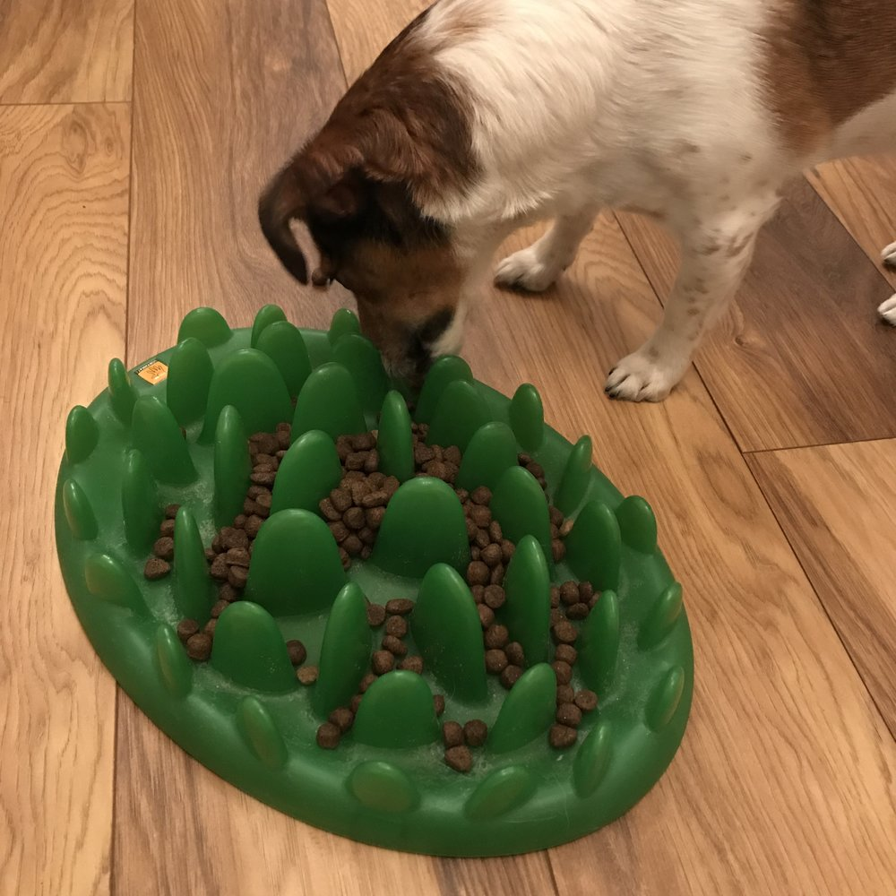 green_interactive_feeder_the_Company_of_animals_What_are_you_feeding_your_dog_Could_it_be_harming_them_pinterest_graphic_dog_food_dog_blog_tails.com_elle_blonde_luxury_lifestyle_blog.png