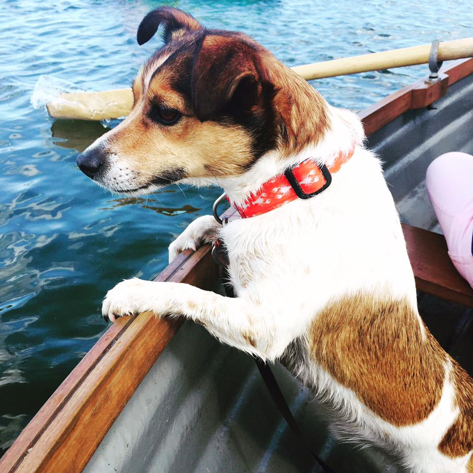 jack_russell_terrier_on_boat_elle_blonde_luxury_lifestyle_blog