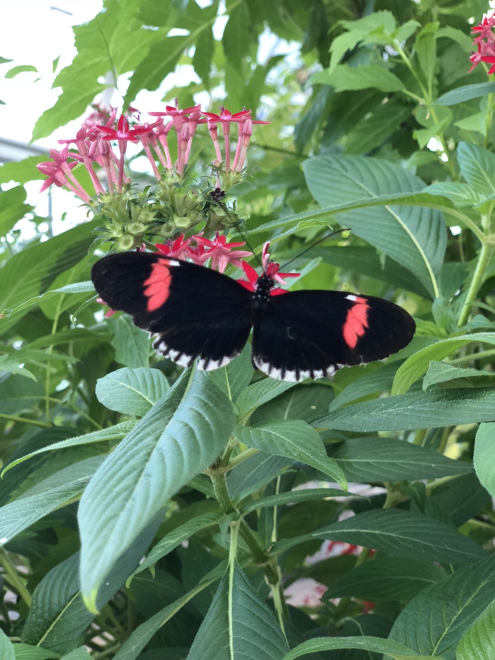 chic stripes lewis ginter butterflies