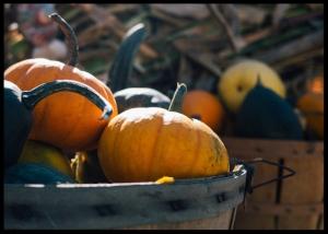 pumpkin bins irena miller
