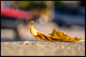 leaf irena miller