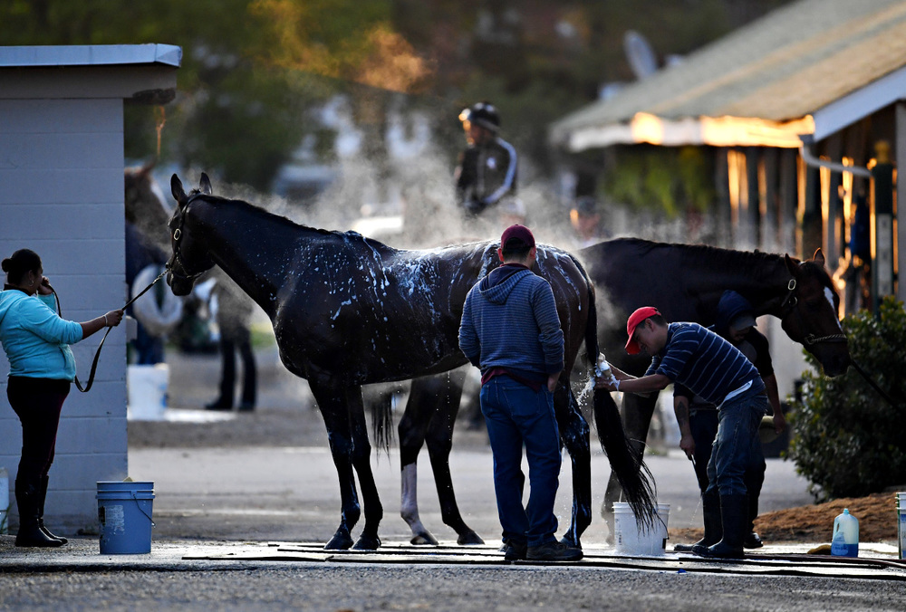 Evans Calling receives a bath from his grooms. Assistant Raphael Maldonaeo (middle, in gray) is from Chicago and has been around horses his whole life. His parents both work here as well. He's working with groom Rodrigo Vazquez and hot walker Rosa Chavez. They work on 20 horses at the Downs.