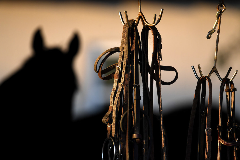 Buckled straps for horses hang outside a barn at Churchill Downs.