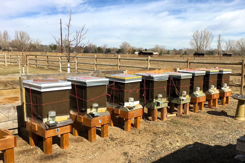 All eight hives, with tarpaper for winter wind protection and plenty of sugar water for the bees to eat.