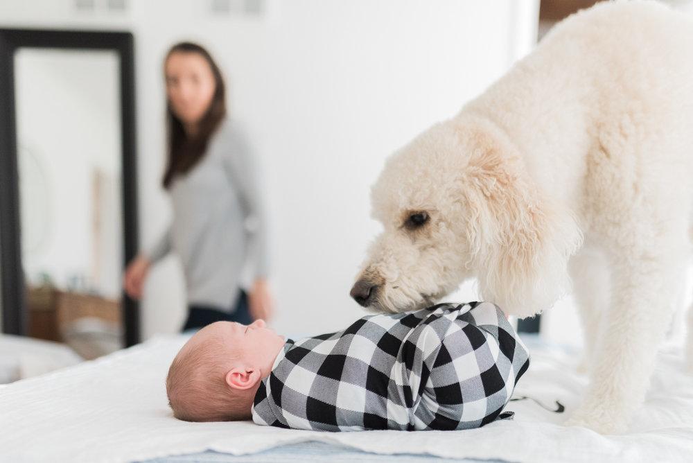 Maryland-newborn-photographer-breanna kuhlmann-lifestyle-in home-BKLP-5.jpg