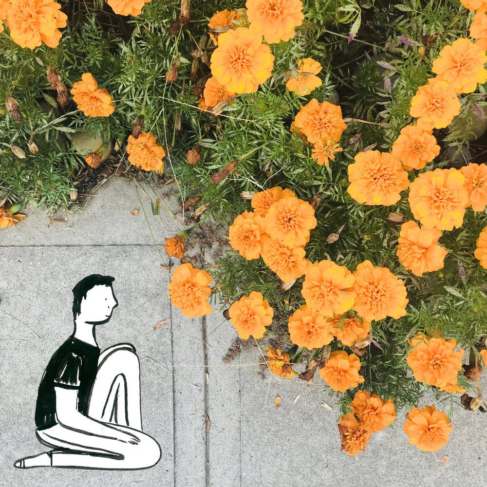 Orange flowers.jpg