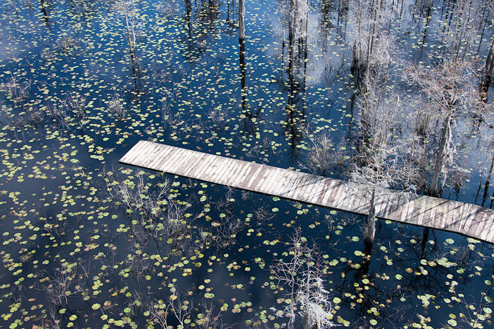 Boardwalk in the Swamp