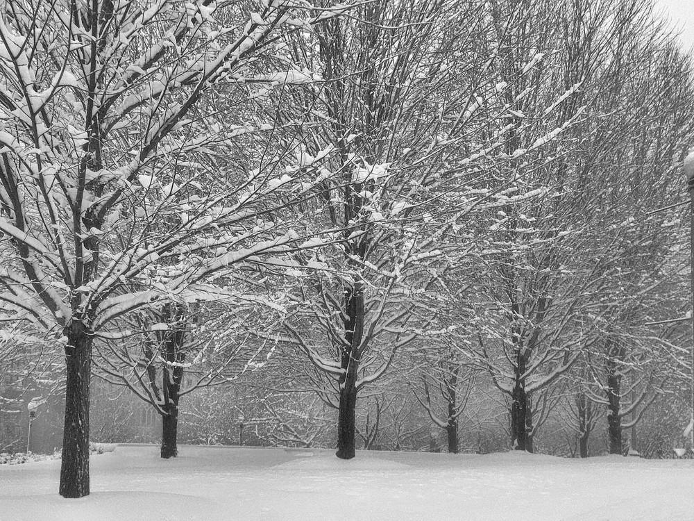 Snowstorm Beauty