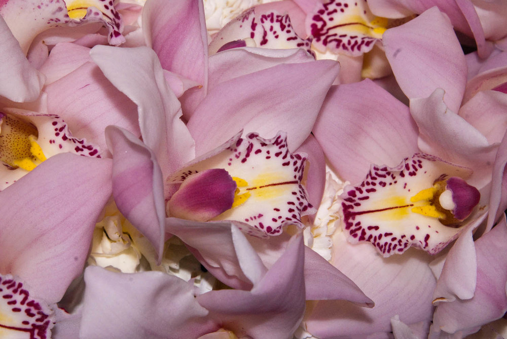 Bunches of Orchids