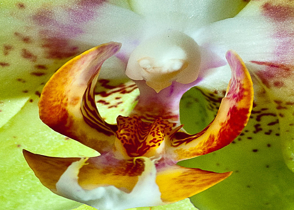 Extraordinary Orchid