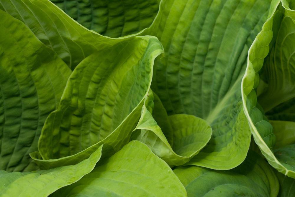 Green Splendor
