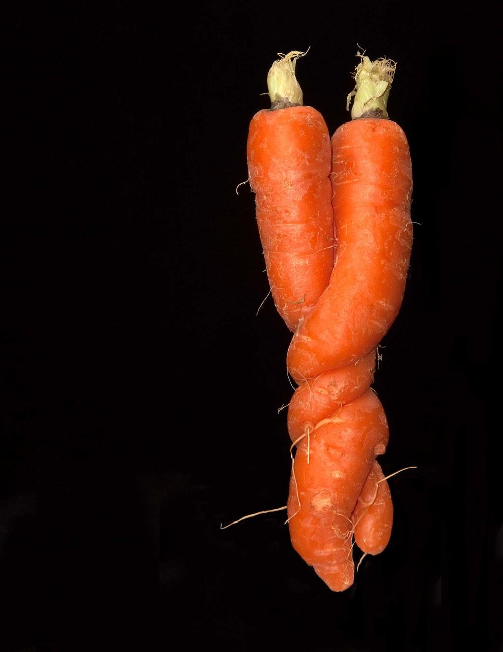 Loving Carrots