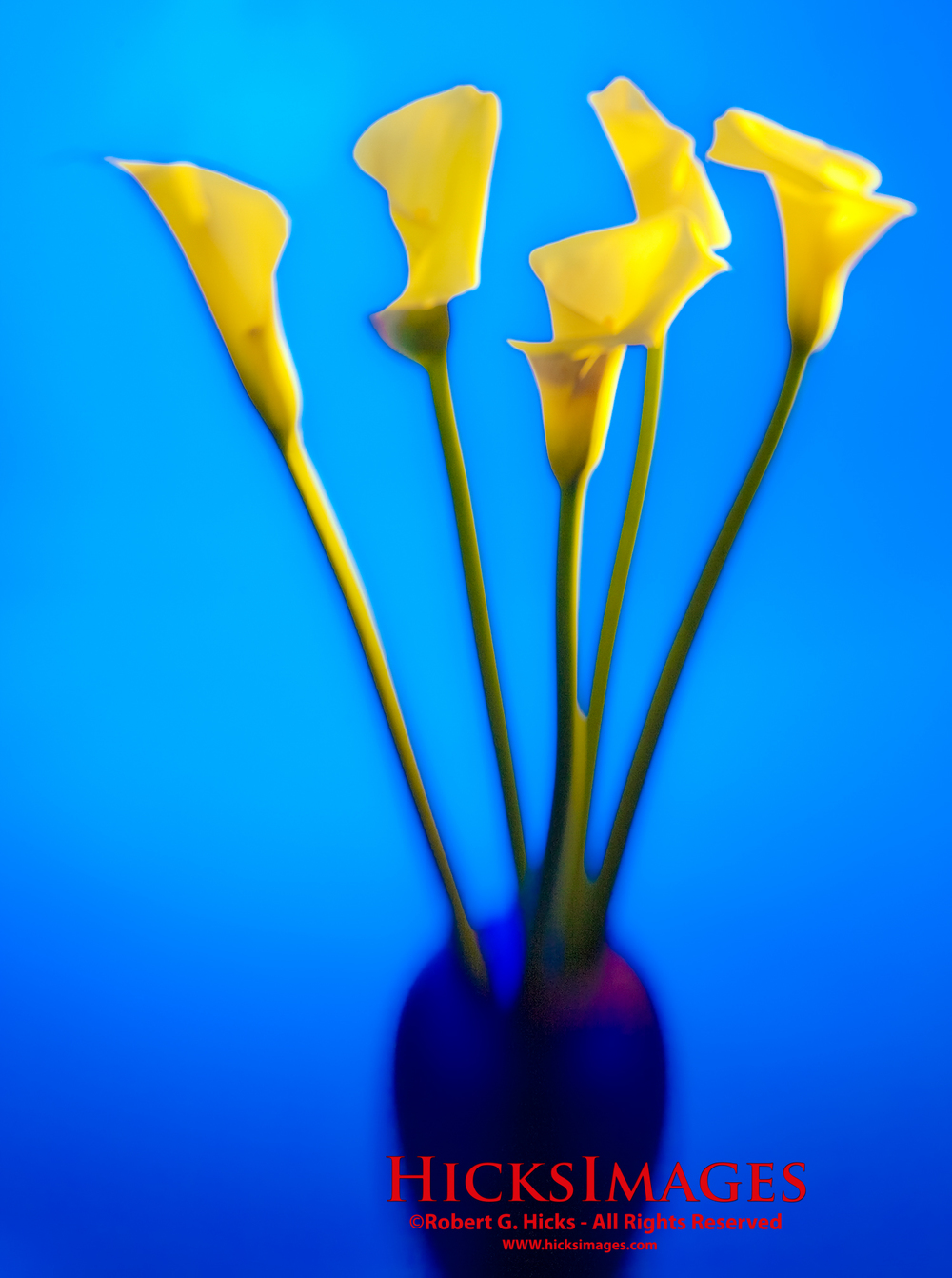 Yellow Callas in a Vase-Abstract