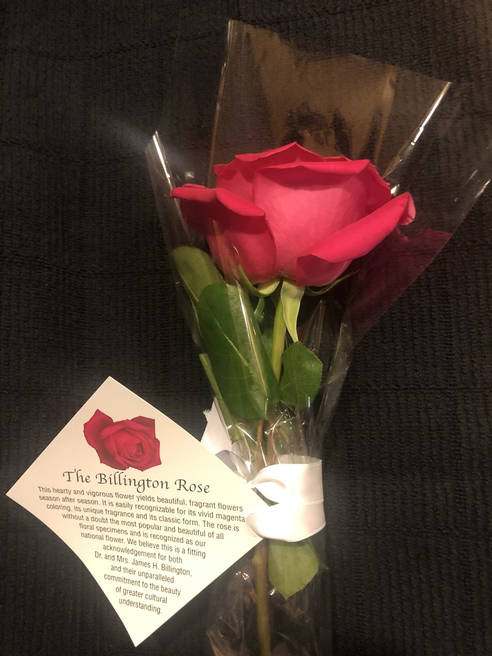 The Billington Rose I received as an audience member at the opening performance of WNO's  Eugene   Onegin . Photo by author.