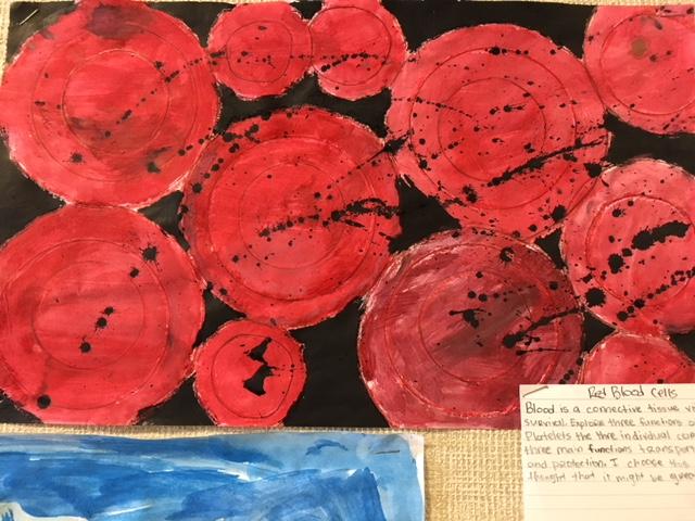 Red Blood Cells.JPG