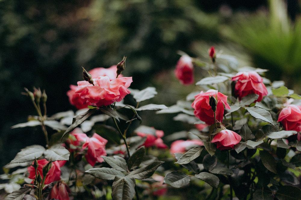 Flowers at Rijk van de Keizer