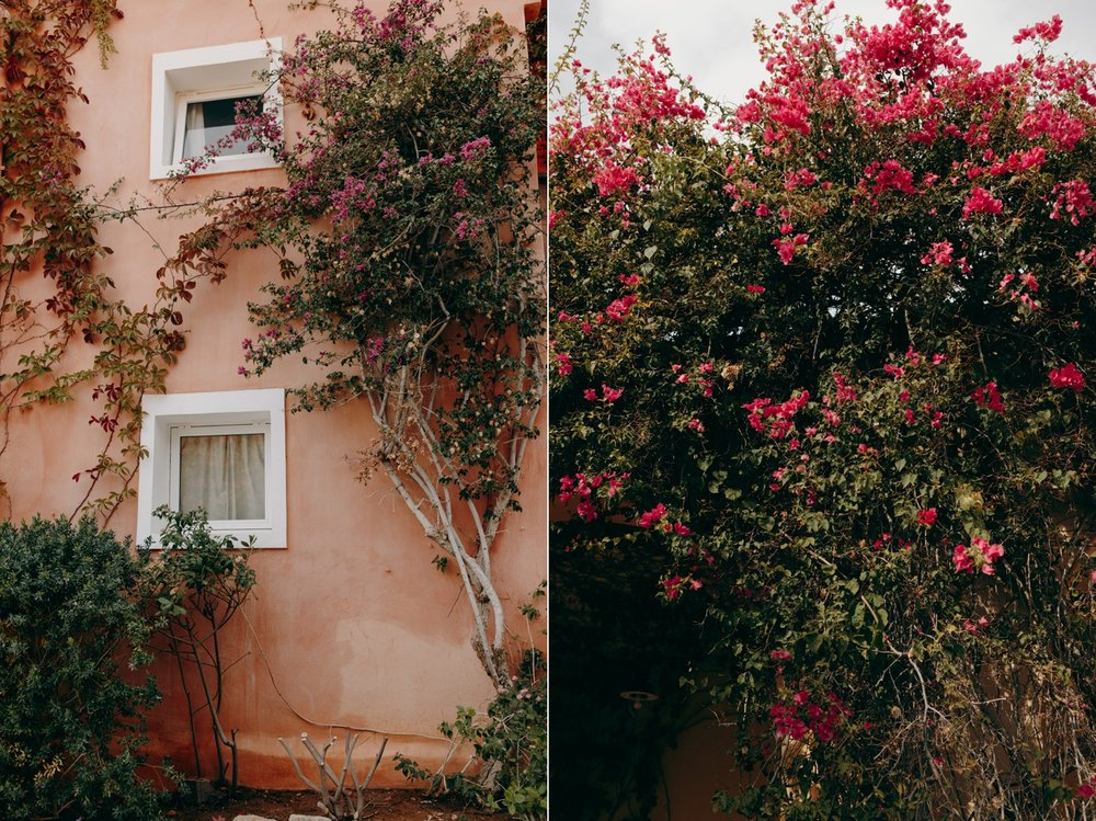 Wall with plants in Crete, Greece