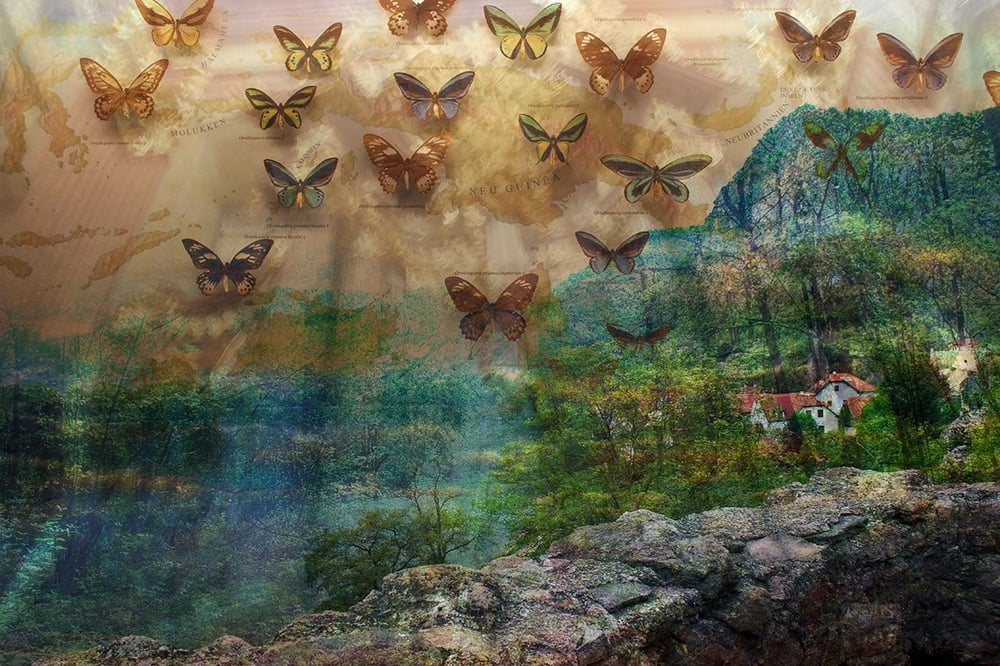 Bird-Wing Butterflies