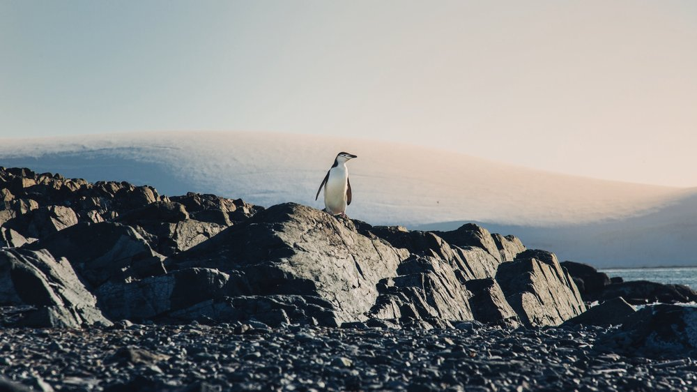 pinguinoSol-1 (Priime Crisp).jpg