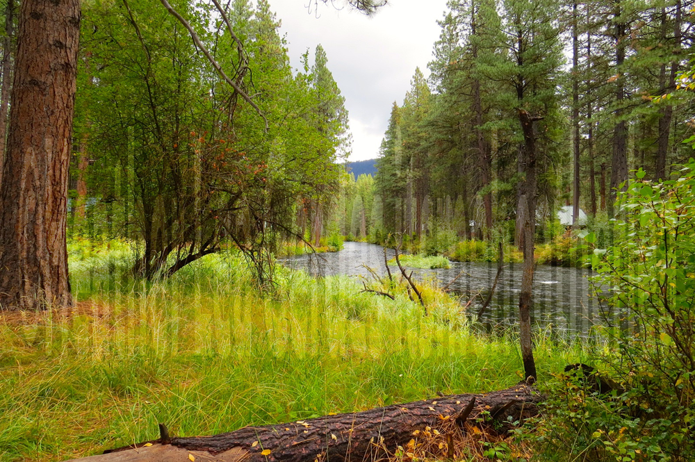 Metolius River-Camp Sherman Gallery  The area is luscious and tranquil. It will beckon you.