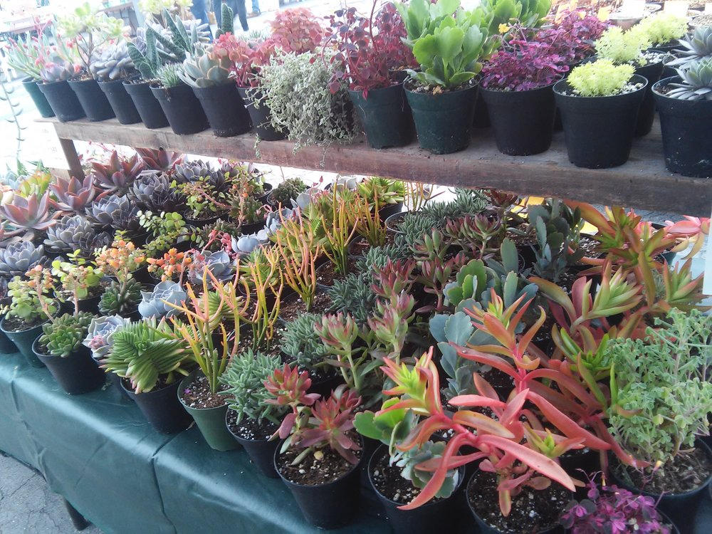 Plants in all colors, sizes and varieties.