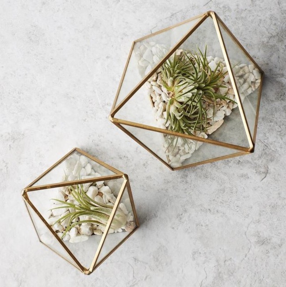 West Elm Terrariums. If you checked out my terrarium video then you know I'm really loving them at the moment. Plants are always a great addition to a space because they promote health and wellness.