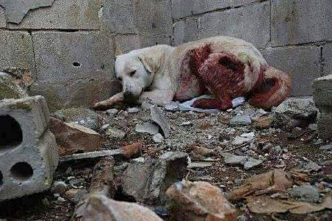 Photo courtesy of SARA (Syrian Association for Rescuing Animals).