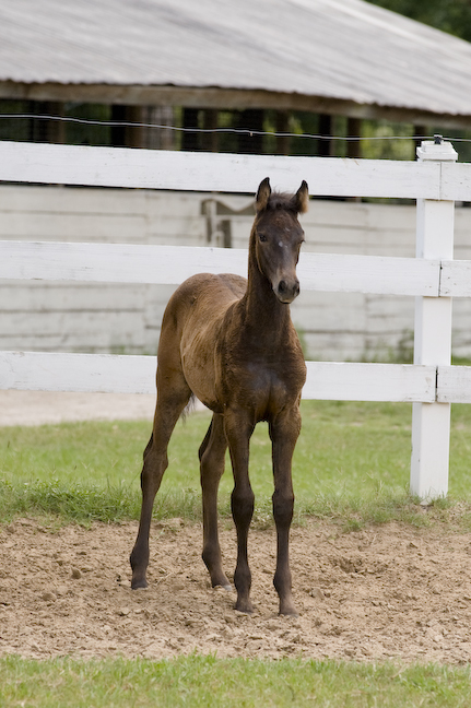 2011 Filly out of Fasta by Master