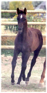 2001 filly Kavi