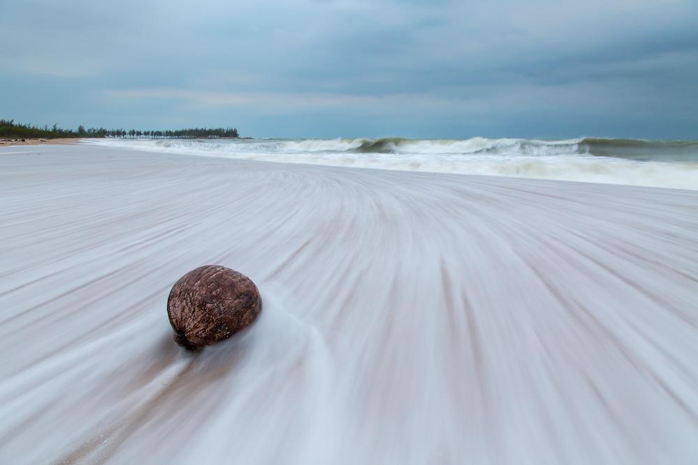 Tidal Coconut