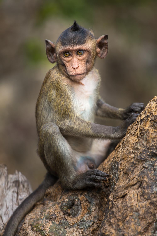 Judgmental Monkey