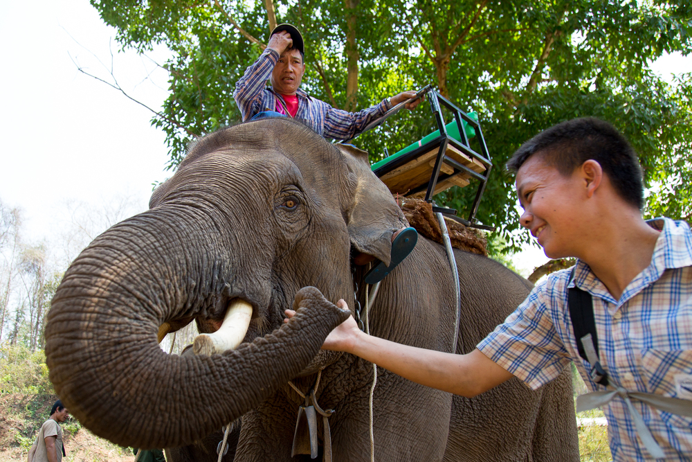A boy plays with an elephant as its keeper sits on top.