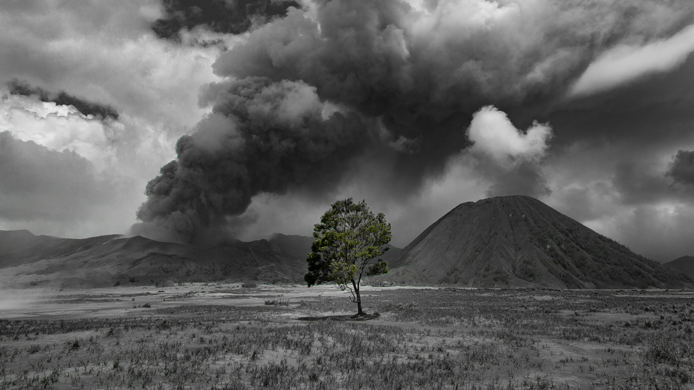 A lone tree in the sea of sand between the caldera wall and Mount Bromo.
