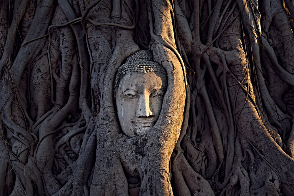 Many years ago, a head fell from a statue of Buddha. This tree has been growing around it ever since.