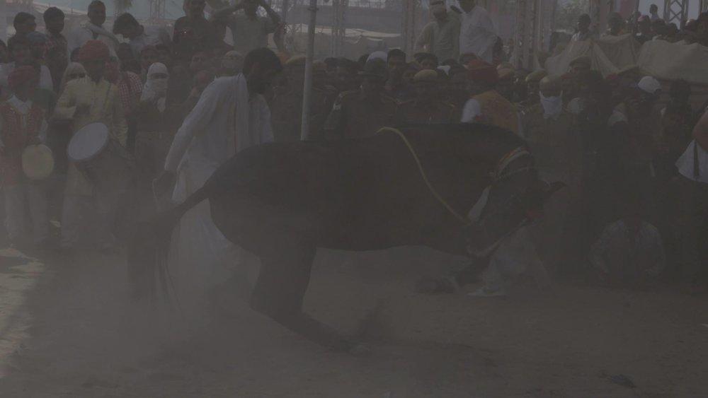 Horse Dance.jpg