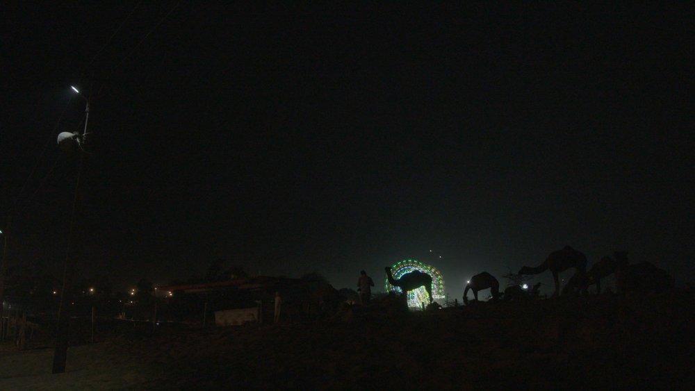 Pushkar Night Camel.jpg