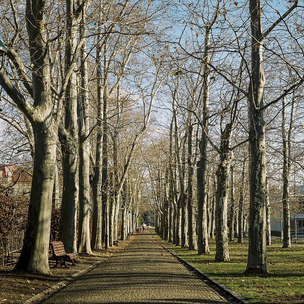 Pathway in Letná Park.