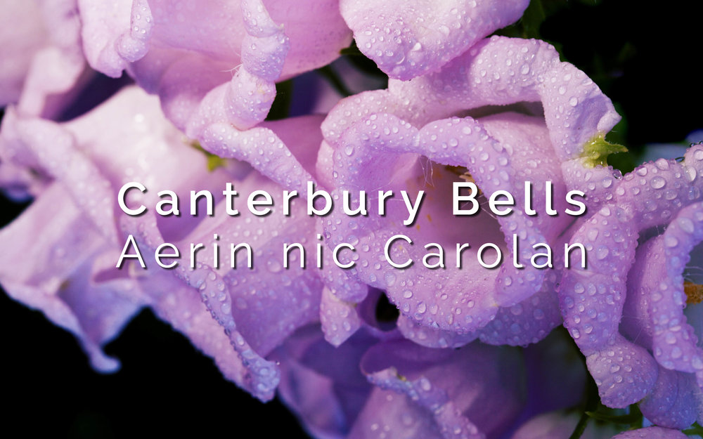Canterbury Bells.jpg