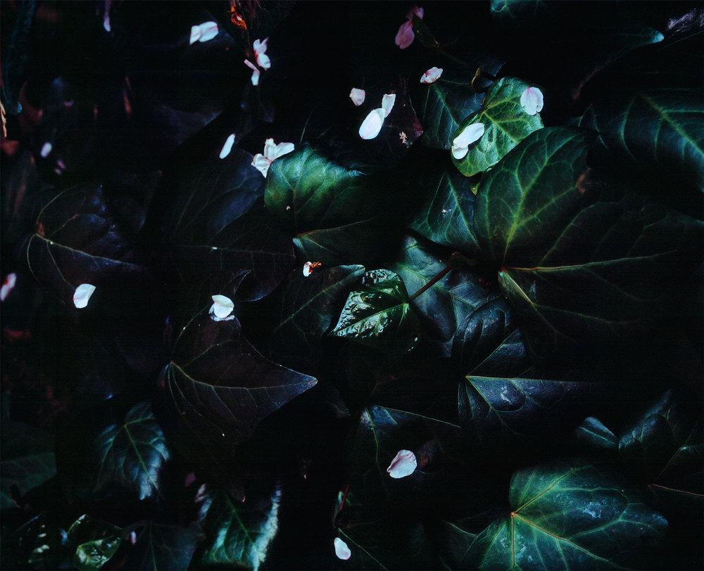 Omotesando Dark, 2015
