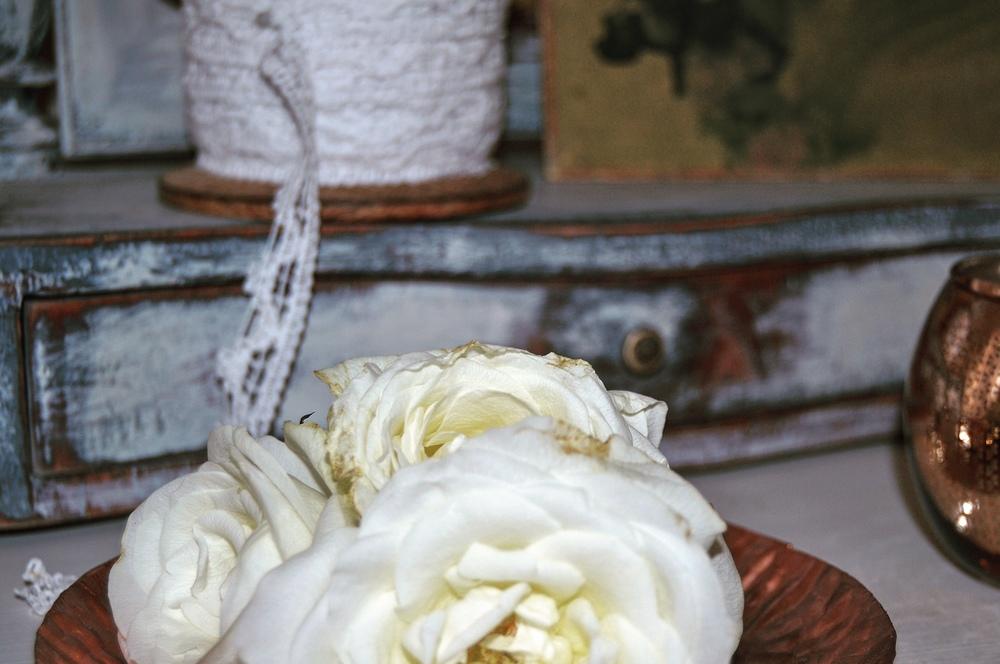 """De nästan färdigblommade rosorna passar fint i den """"slitna"""" miljö..."""