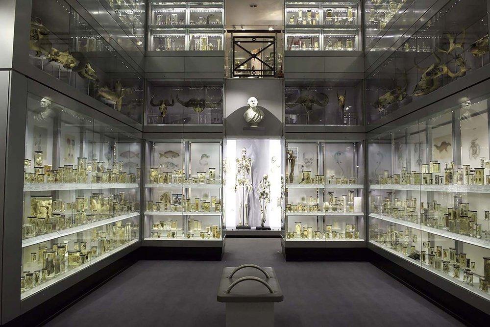hunterian museum.jpg