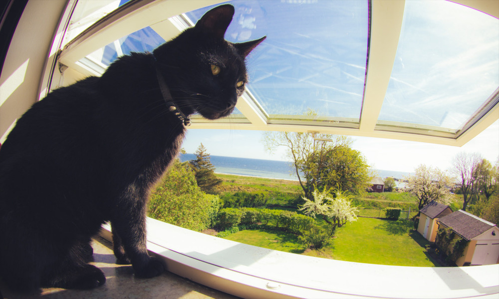 Throwback Thursday: Mini had a great view over the garden from my window.  Photo taken 2011.